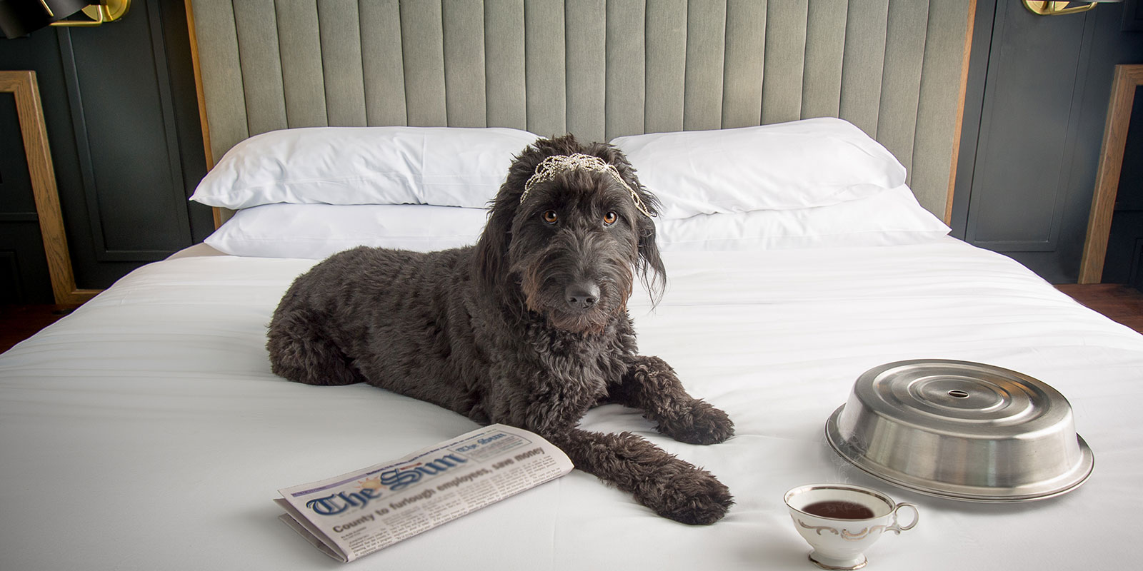 dog lying on bed with newspaper
